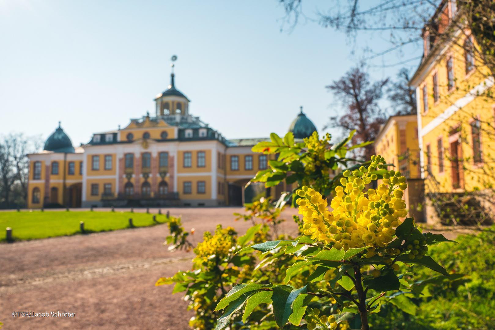Blick auf Schloss Belvedere in Weimar, blühende Sträucher im Vordergrund